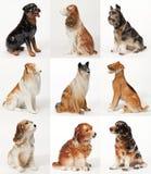Collage av keramiska statyer av hundkapplöpning arkivbilder
