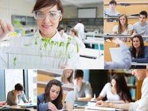 Collage av läraren och studenter royaltyfri foto