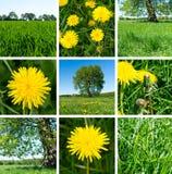 Collage av maskrosor, gras och träd Sommaruppsättning fotografering för bildbyråer