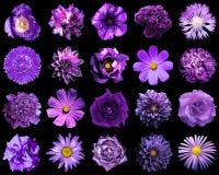 Collage av naturliga och overkliga violetta blommor 20 i 1 Royaltyfri Fotografi