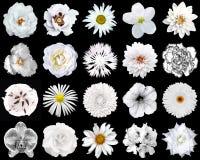 Collage av naturliga och overkliga vita blommor 20 i 1 Royaltyfria Foton