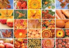 Collage av naturliga orange växter som är horisontal Arkivfoton