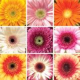 Collage av nio olika Gerber Fotografering för Bildbyråer