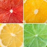 Collage av nya citrusa skivor Royaltyfria Bilder