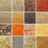 Collage av olika örter och kryddor royaltyfri bild