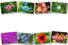 Collage av olika blommor på en vit bakgrund Royaltyfri Bild