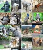 Collage av olika djur Arkivfoton