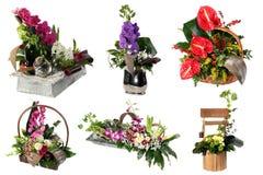 Collage av olika färgrika blommaordningar royaltyfri fotografi