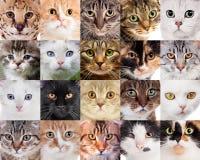 Collage av olika gulliga katter arkivfoto
