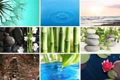 Collage av olika härliga bilder royaltyfria bilder