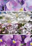Collage av olika nya blommor Fotografering för Bildbyråer