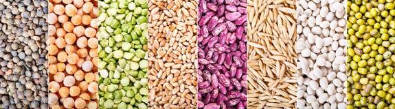 Collage av olika sädesslag, frö, bönor och korn Arkivfoto