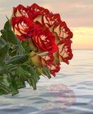 Collage av röda rosor. Royaltyfria Foton