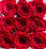 Collage av röda rosor Buketten av nya rosor, blommar ljus bakgrund Ett slut upp makroskott av en röd ros blommaillustrationen sho arkivfoto