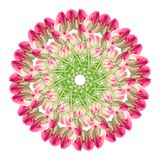 Collage av rosa h?rliga tulpanblommor p? en vit bakgrund arkivfoton