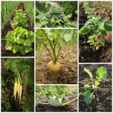 Collage av trädgårds- bilder Arkivbild