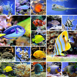 Collage av undervattens- foto Arkivfoto