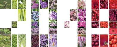 Collage av växter i form av diagram 2019 Royaltyfria Foton