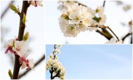 Collage av vårblommor Royaltyfri Bild