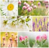 Collage av vårblommor royaltyfri foto