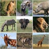 Collage av vilda djur, däggdjur Arkivbild