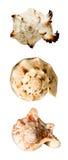 Collage avec des seashells photo libre de droits