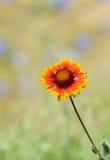 Collage avec la belle fleur couvrante indienne Images stock