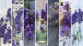 Natural, fresh cosmetics with lavender flowers. Collage, banners, beautful lavender fresh and decorative royalty free stock photos