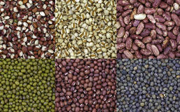 Collage of beans. A collage of six kinds of beans Stock Images