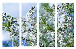 Collage of beautiful apple tree white flowers . Royalty Free Stock Images