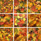 A collage of beautiful fallen Autumn leaves Stock Image