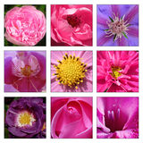 Collage of beautiful flowers Royalty Free Stock Photography
