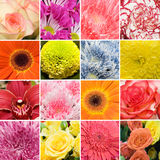 Collage from beautiful fresh colours Stock Photo