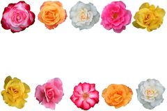 Collage of beautiful  rose blossoms Stock Images