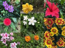 Collage of Beautiful variety of colorful flowers and plants Stock Photos