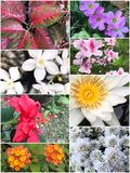 Collage of Beautiful variety of colorful flowers and plants Royalty Free Stock Photography
