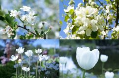 Collage of beautiful white flowers. Stock Image