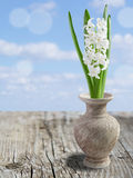 Collage with beautiful white hyacinth. Selective focus on lower inflorescence, shallow DOF Stock Image