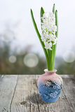 Collage with beautiful white hyacinth. Collage with beautiful white hyacinth . White background. Selective focus on lower inflorescence, shallow DOF Stock Photography