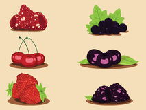 Collage from berries Vector Royalty Free Stock Photography