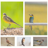 Collage birds Stock Image