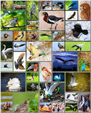 Collage of birds Stock Photos
