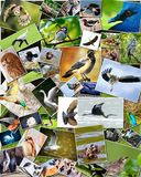 Collage of birds Stock Photography