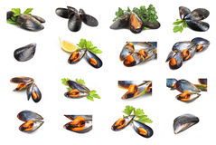 Collage of black mussels Royalty Free Stock Image