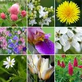 collage blommar fjädern royaltyfri fotografi