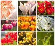 collage blommar fjädern Arkivbilder