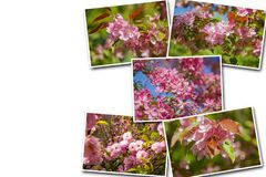 Collage blooming apple trees in the garden, the flowers on the trees in royalty free stock images