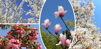 Collage - blossoming trees at springtime Royalty Free Stock Photography