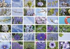 Collage blu naturale delle piante, trentasei elementi, orizzontale Fotografie Stock Libere da Diritti