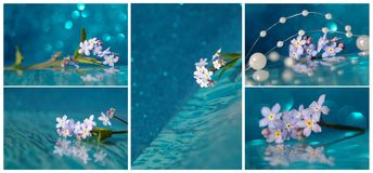 Collage with blue flower Stock Image